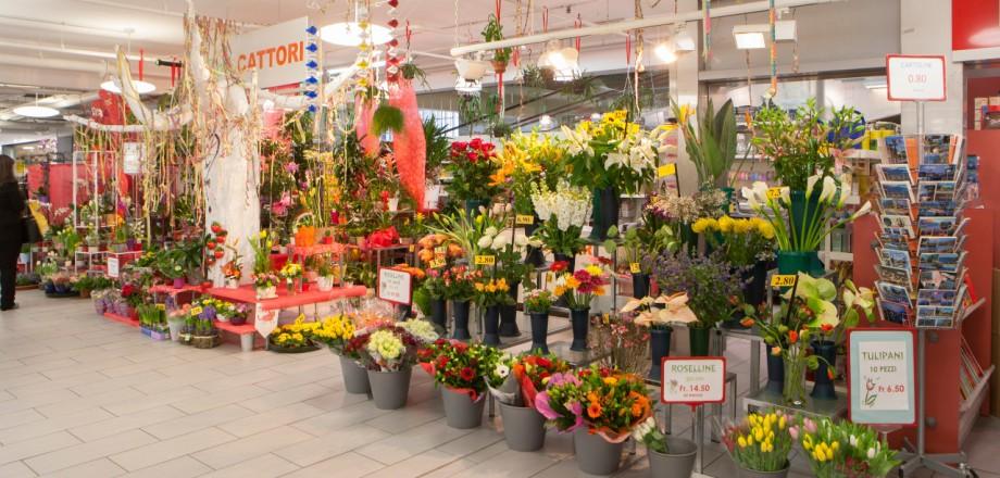 fiori-cattori